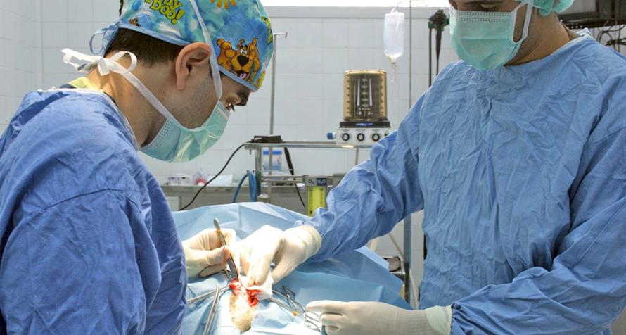 Cirugía y Traumatología